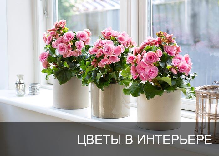 Цветы в интерьере